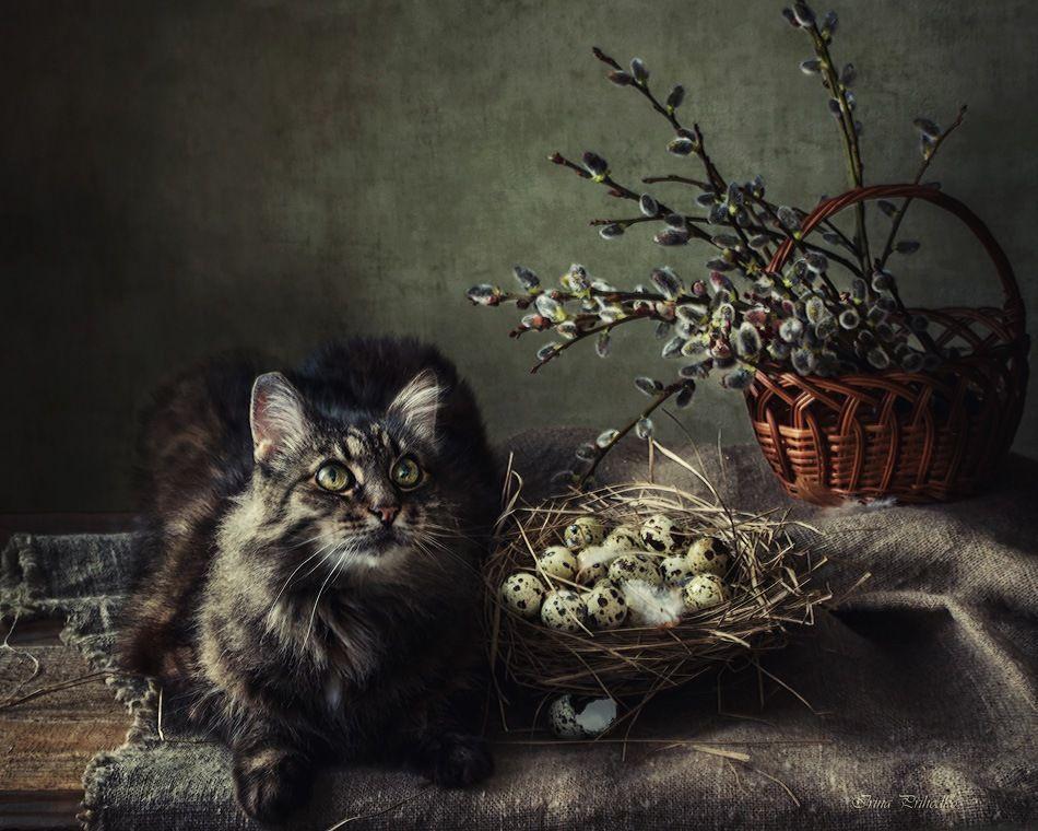Домашние пушистые кошки фото место, где