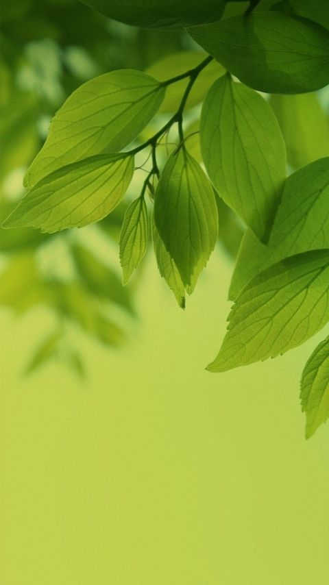 480x854 Green Leaves Samsung Galaxy Wallpapers Hd Mobile Green Nature Wallpaper Green Leaf Wallpaper Galaxy Wallpaper