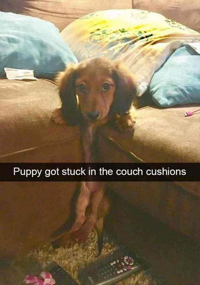 Funny Animal Pics Of The Day – Wackyy Picdump 5 (60 Photos) #funnyanimalpics