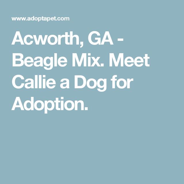 Acworth, GA - Beagle Mix. Meet Callie a Dog for Adoption.