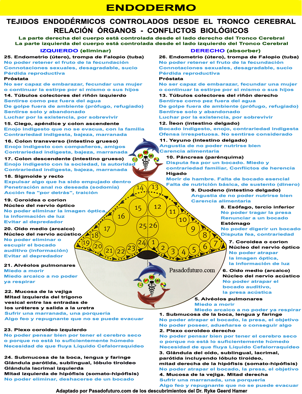 ORGANOS DEL ENDODERMO Y SUS CONFLICTOS BIOLÓGICOS | Pinterest ...