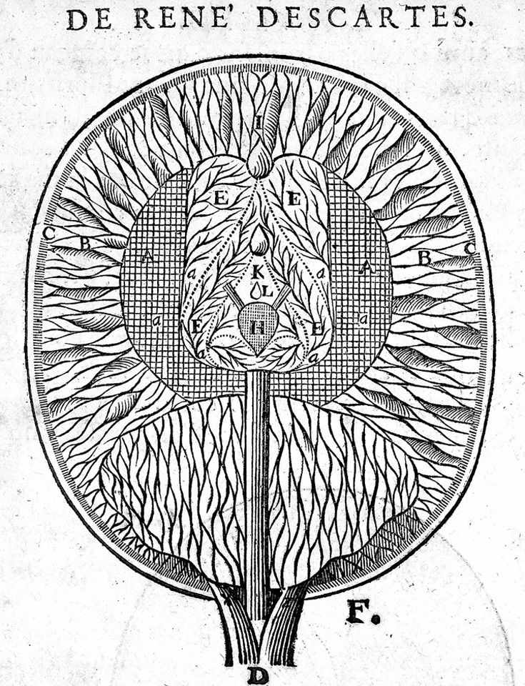 Diagram of the ventricles of the brain and pineal gland lhomme de diagram of the ventricles of the brain and pineal gland lhomme de ren ccuart Gallery