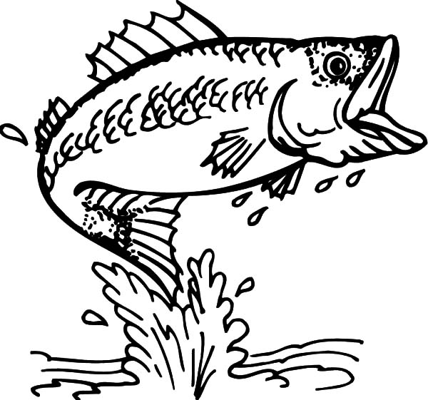 Cathing Bass Fish Coloring Pages Best Place To Color