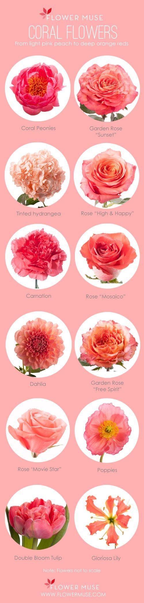 Our Favorite Coral Flowers Coral Springs Garden Roses And Spring