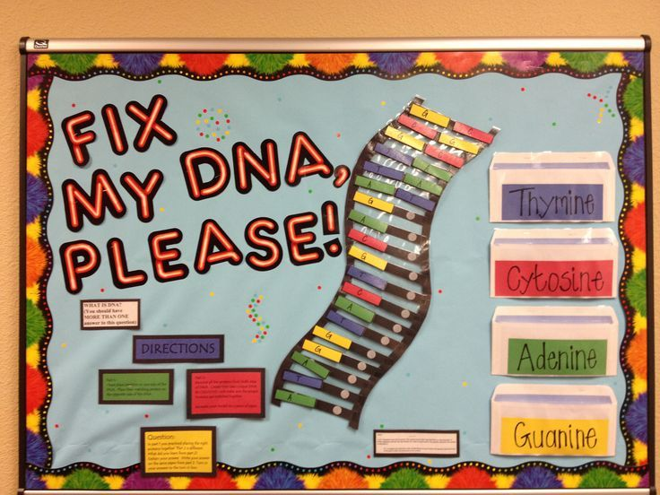 Science Charts For Classroom Decoration ~ Dna structure bulletin board high school biology