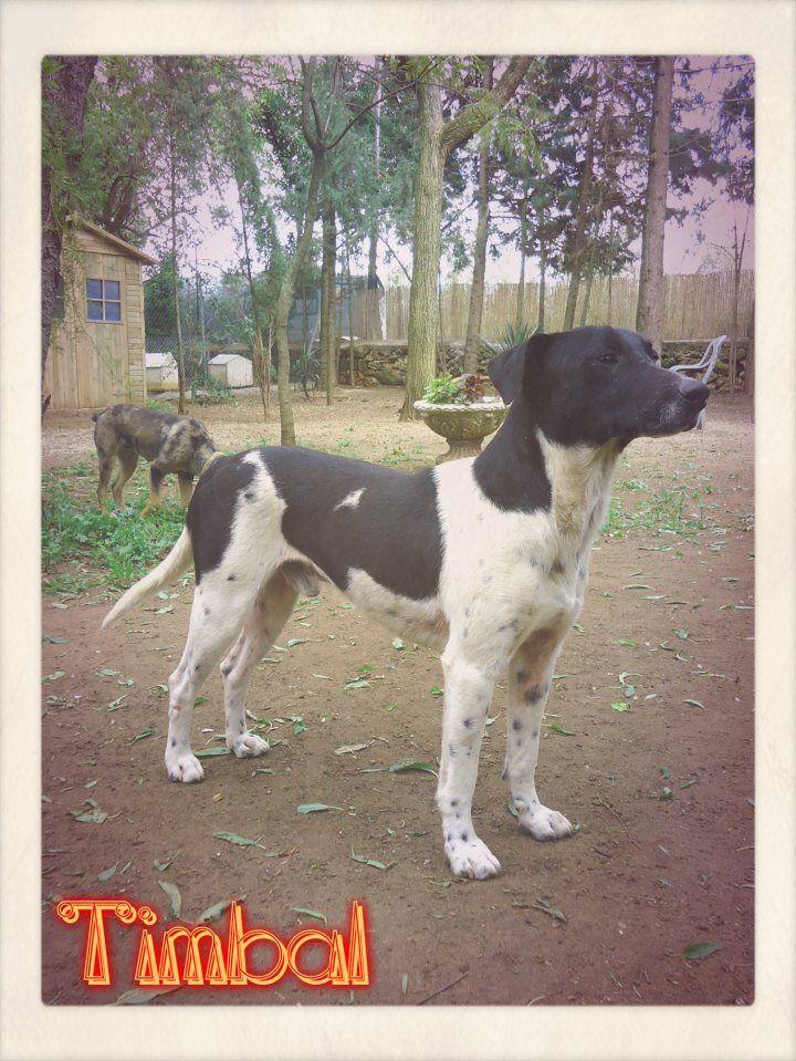 Adoptado Timbal Es Un Perro Rescatado De La Perrera De Mairena