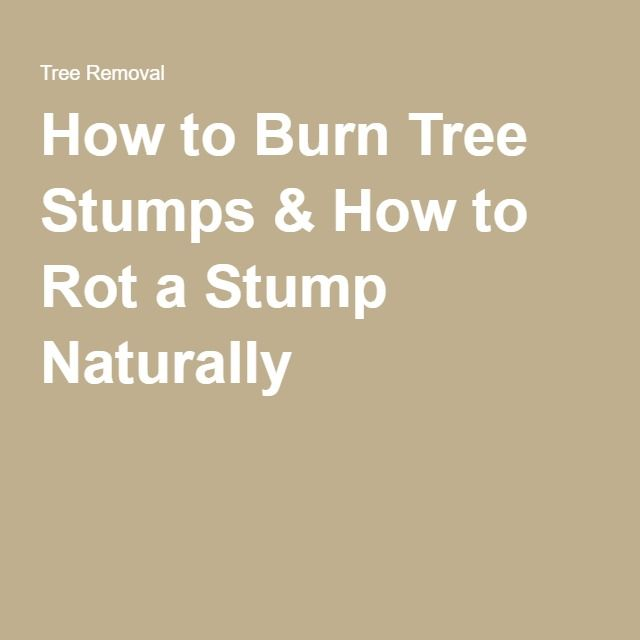 How To Burn Tree Stumps How To Rot A Stump Naturally Tree Stump Stump Rot Rot