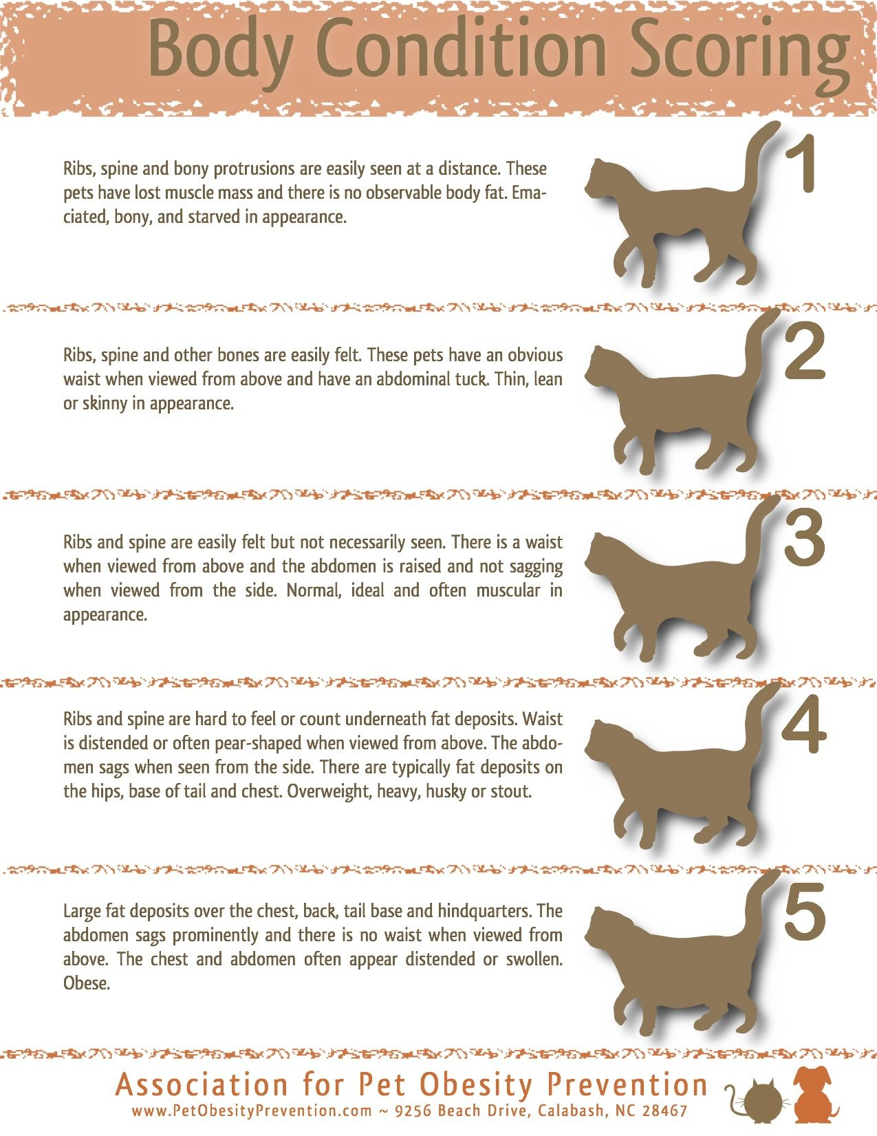 How to tell if your #cat is a healthy weight #pet-health-