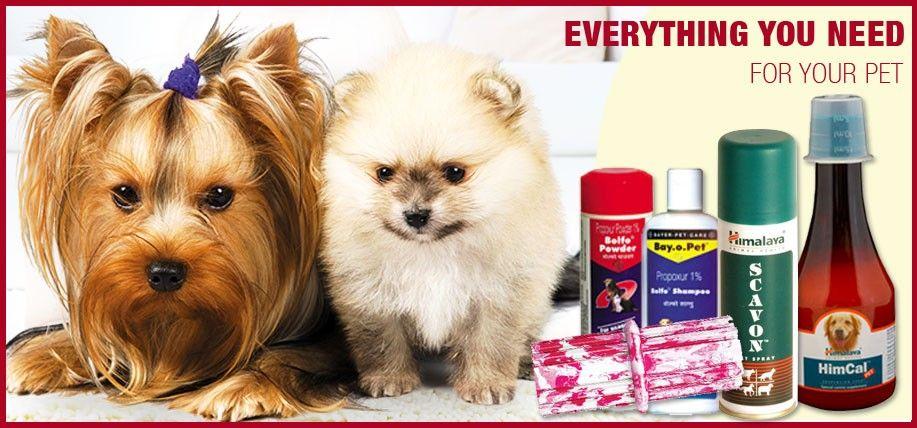 Cute Online Pets Shop Pet Shop Pets Pet Supplies