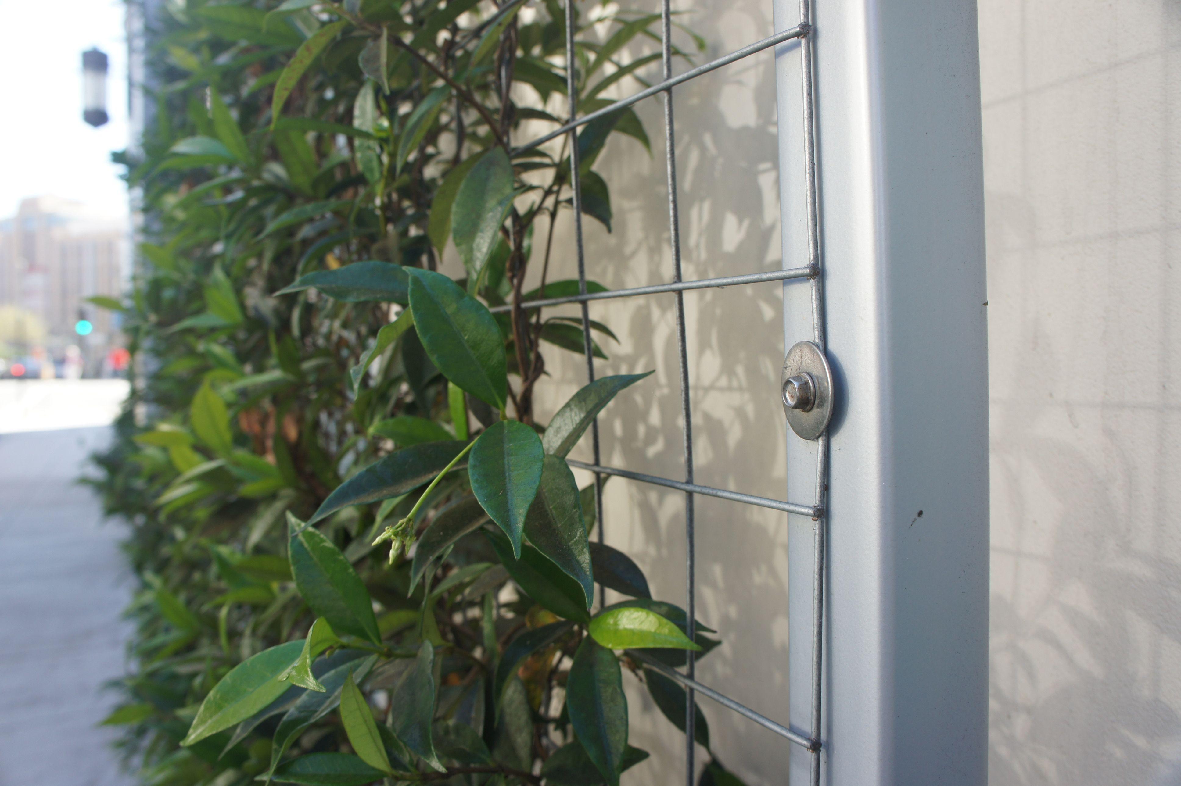 Klimrozen opbinden google zoeken tuin pinterest for Vertical garden panels