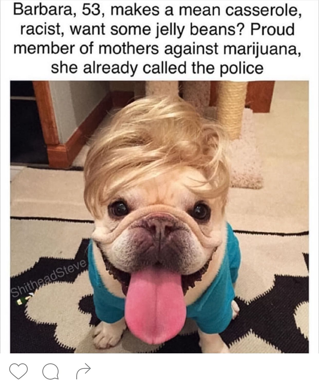 Dog bios natural doggy pinterest dogs cute dogs and cute animals