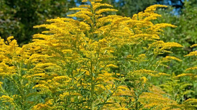 Nawloc Foto Fotolia Plants Herbs Flowers