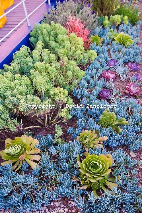 succulent plants around pool - google search … | pinteres…