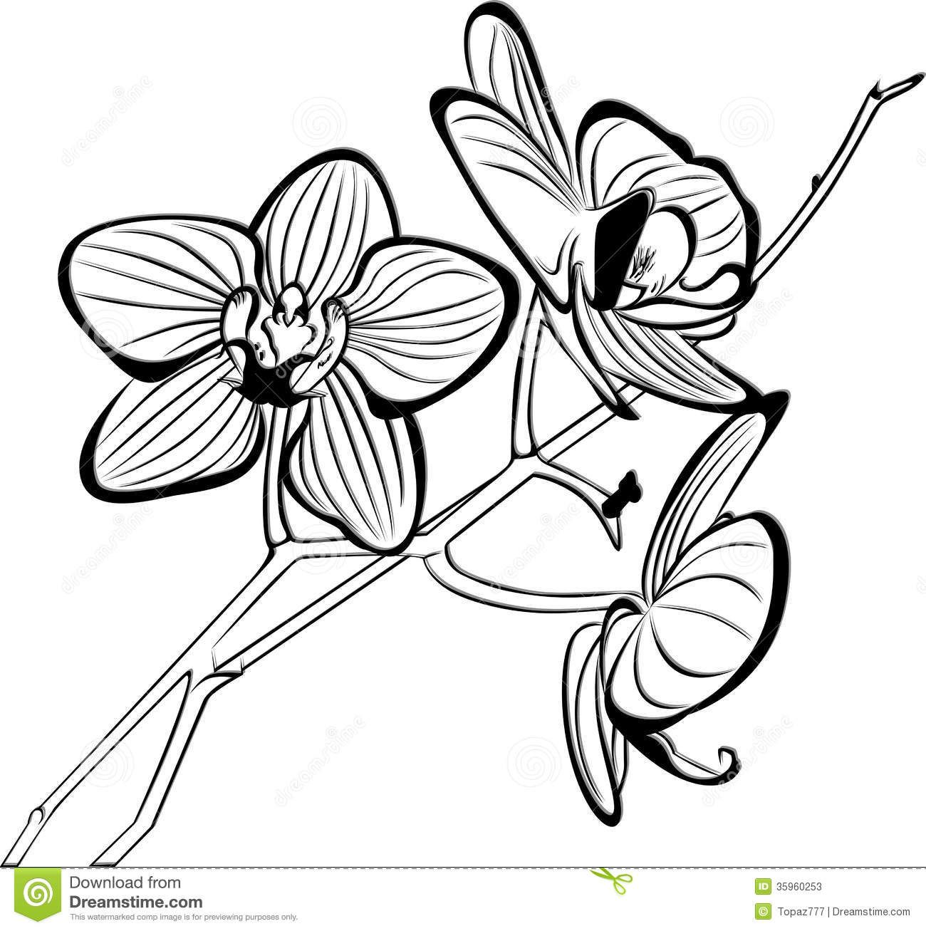 coloring pages of orchids | Tropical Flower Coloring - Viewing ...