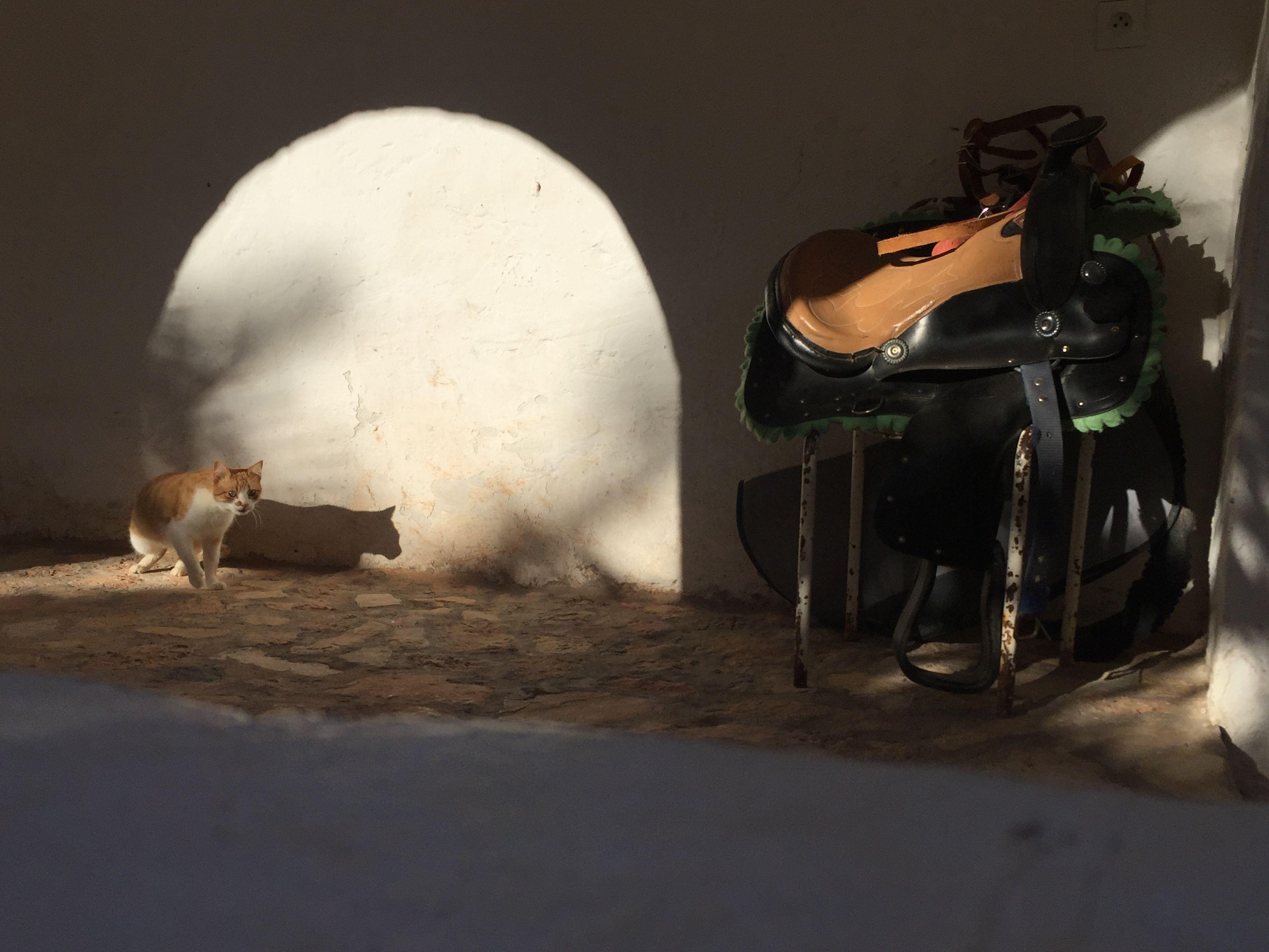 "Maison d h´tes ""Gite Tarist"" Ghardaia Algérie"