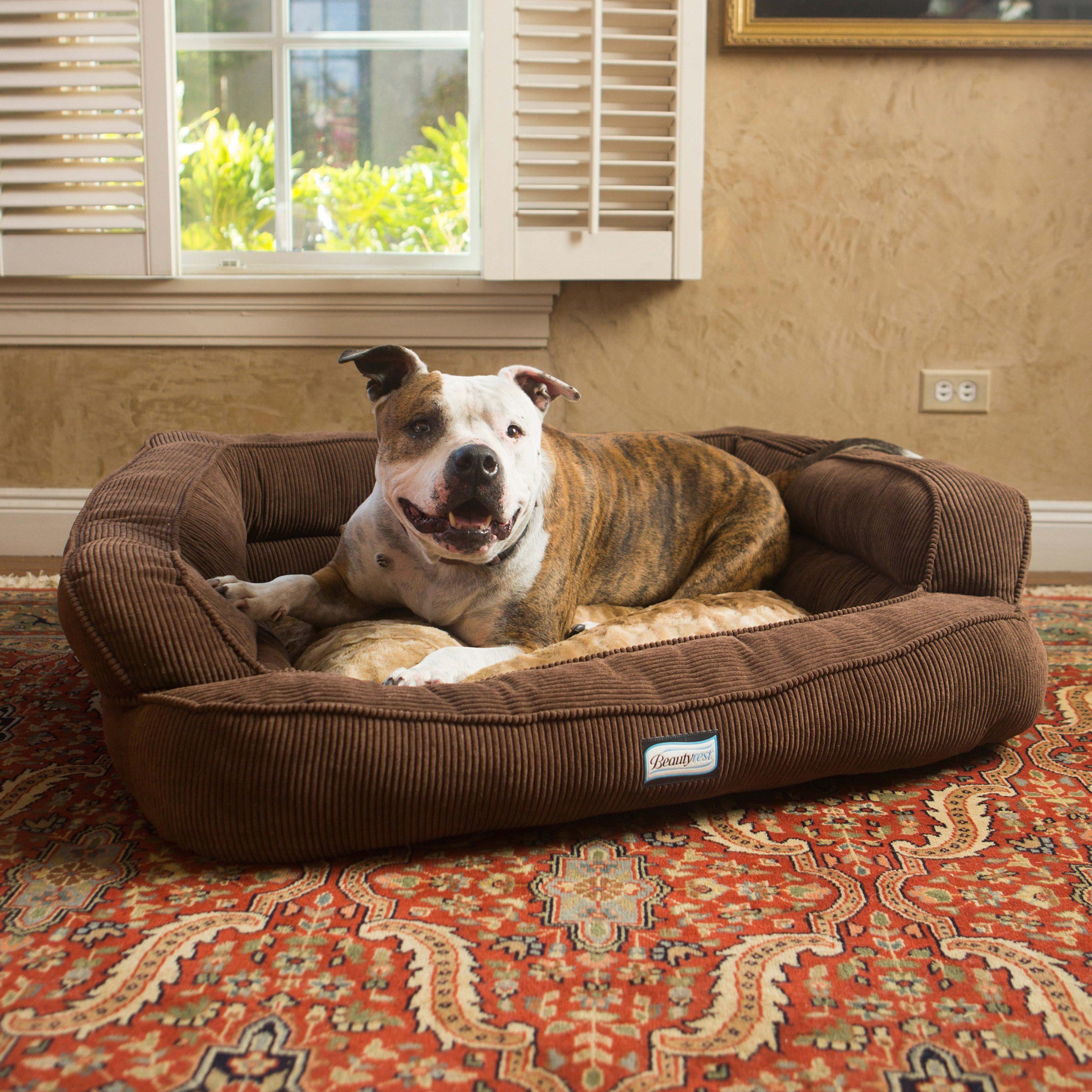 Simmons Colossal Rest Orthopedic Memory Foam Dog Bed