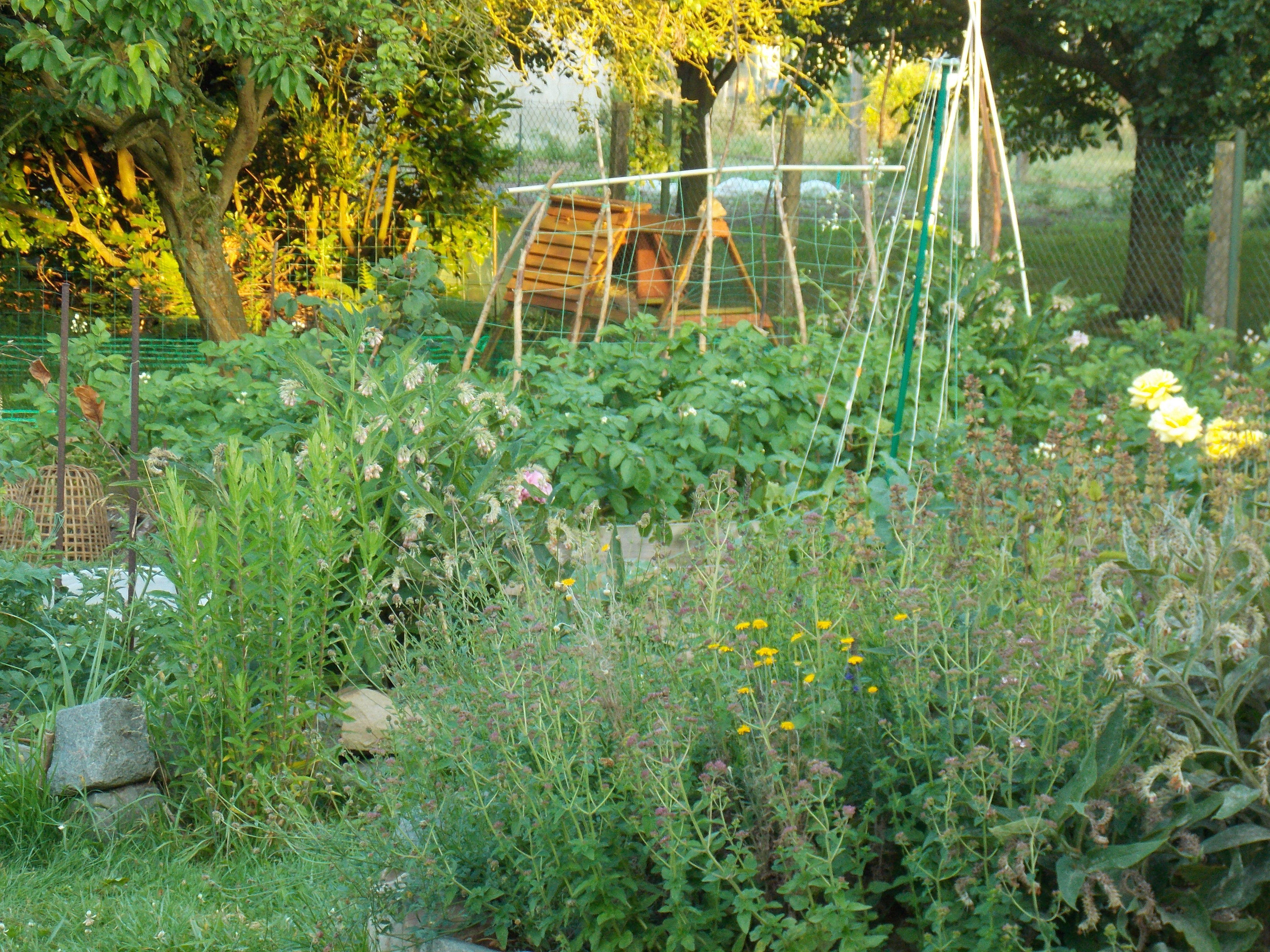 411752addbfbb444ac9e69d243924af4 Frais De Haie De Jardin Concept