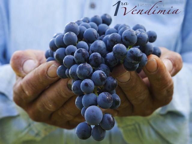 "Fiesta de la Vendimia "" Harvest wine Festival"