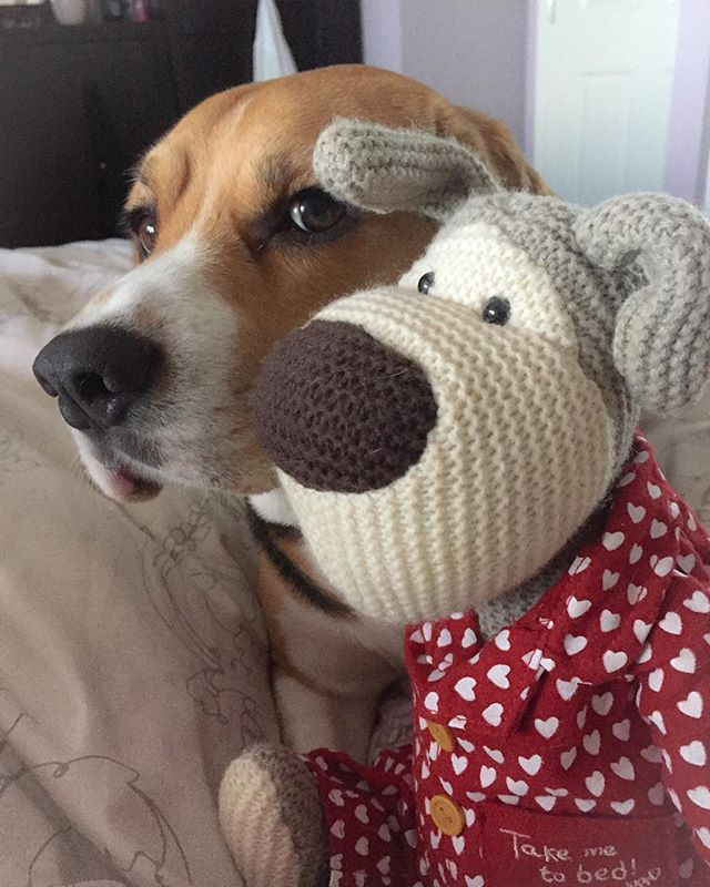 Georgeinamoment On Instagram No Mother I Am Not Doing Anything Except Bond With Boofle Besides He Looks A Little Like Me Don Pet Toys Beagle Baby Puppies