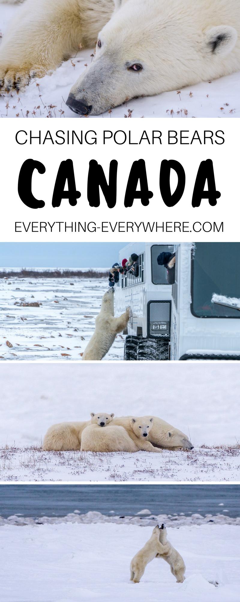 The Polar Bears Of Cape Churchill Canada Travel Polar Bear Canada Travel Guide