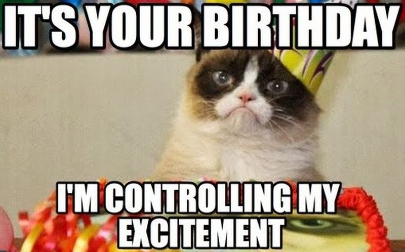 Priority Delivery Your Happy Birthday Cat Happy Birthday Cat Cat Birthday Funny Funny Happy Birthday Meme