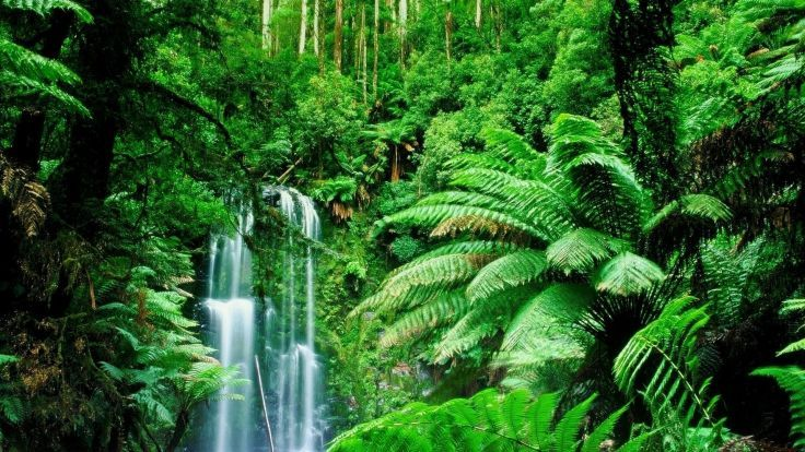 green landscapes trees jungle forest rainforest wallpaper background