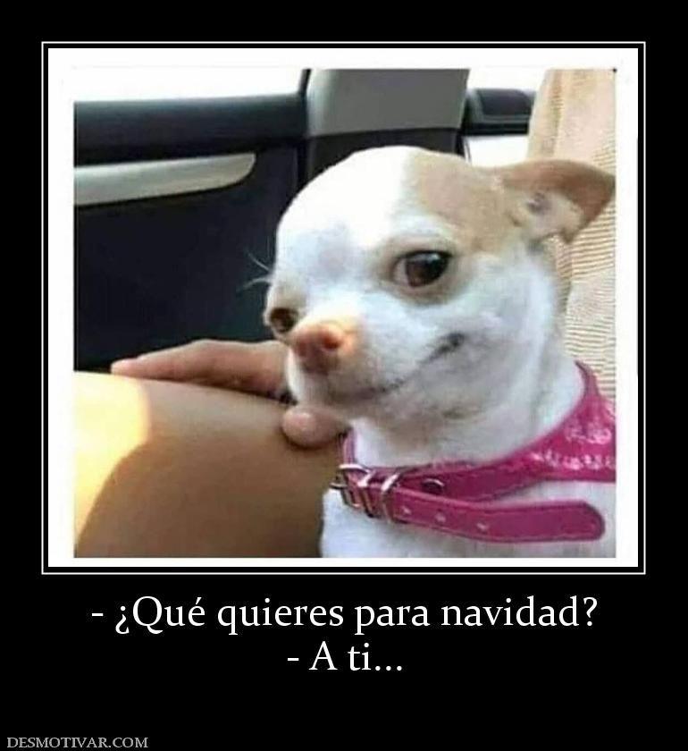 Que Quieres Para Navidad A Ti Funny Dog Memes Cute Funny Animals Funny Animal Pictures