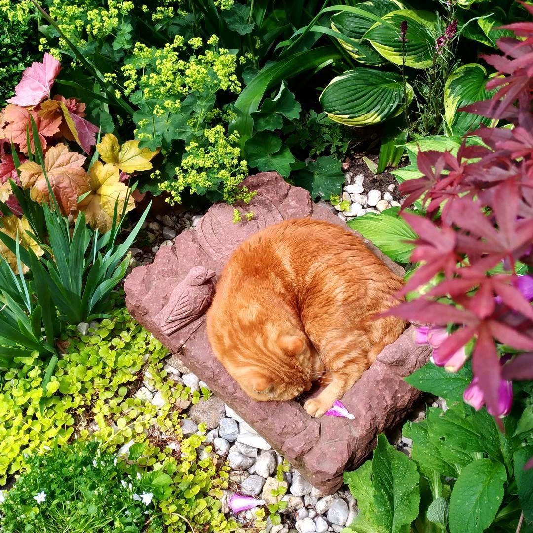 Gdybyscie Sie Zastanawiali Do Czego Sluzy Poidelko Dla Ptakow To Rudy Wam Podpowie Kot Rudykot Rudy Kotwogrodzie Ogrod Ginger Cats Ginger Flowers