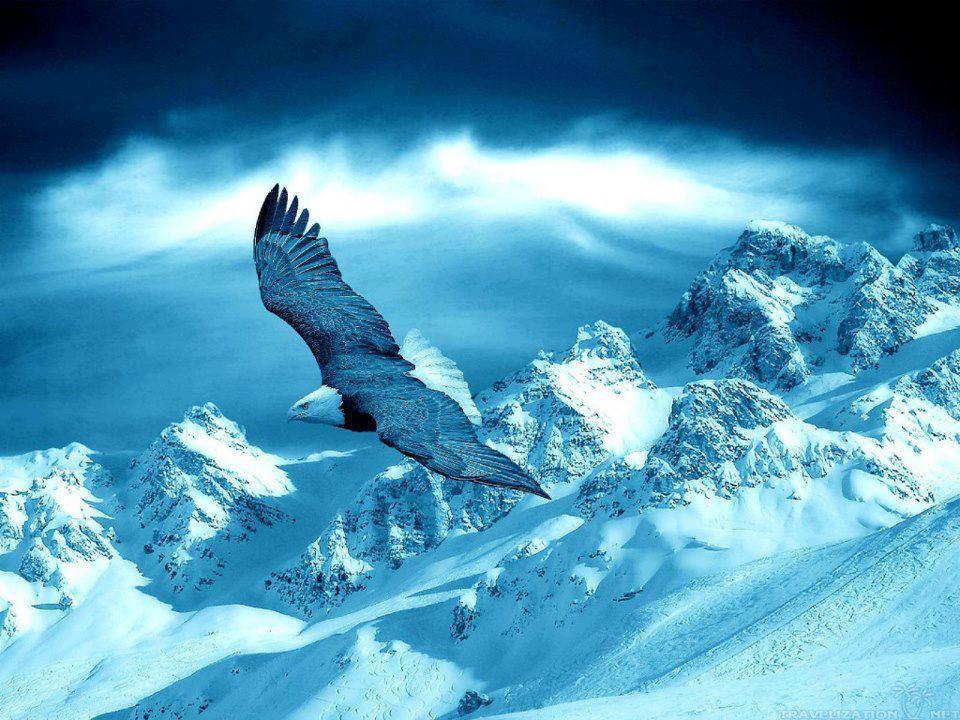 Pin van ♛ Daughter of Grace ♛ op Eagle Wings