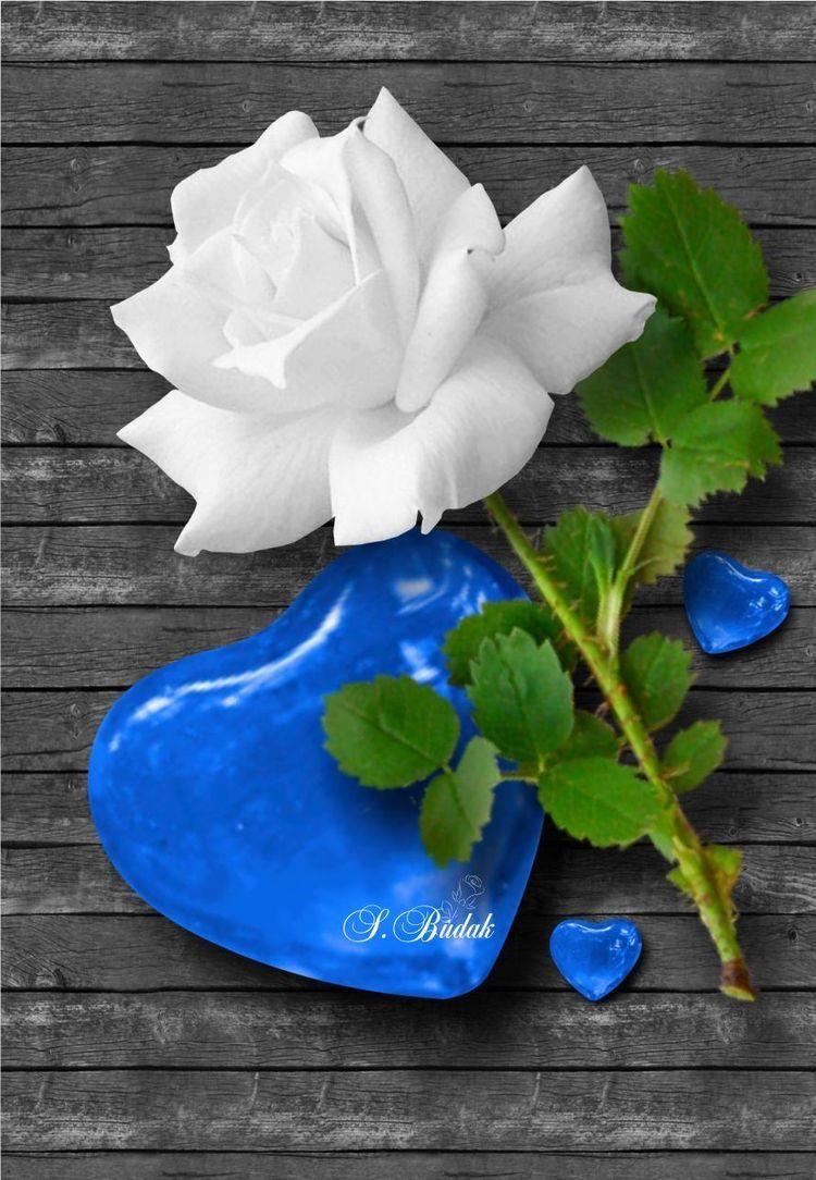 Good Morning My Love Love You Jessiah Flores Bonitas Papel De Parede Flores Molduras Bonitas Coolest rose flower hd wallpaper