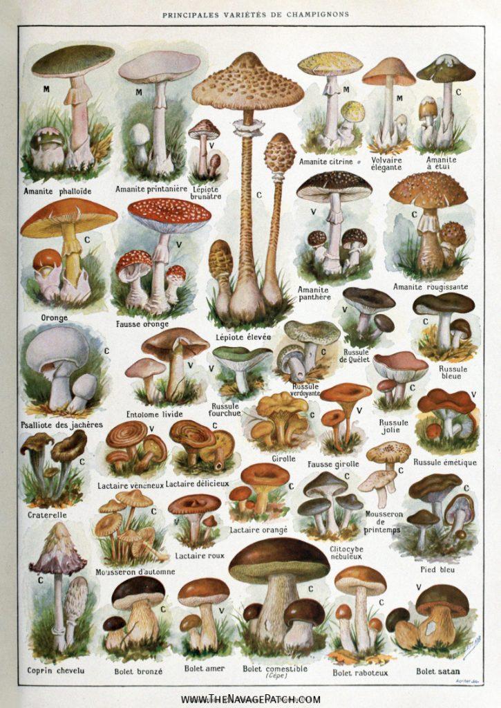 Amazing FREE Vintage Botanical Prints
