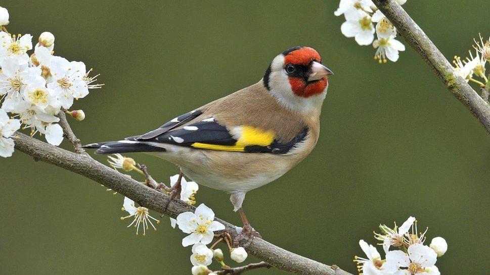 Afficher l 39 image d 39 origine pot de fleurs pinterest for Oiseaux de jardin au printemps