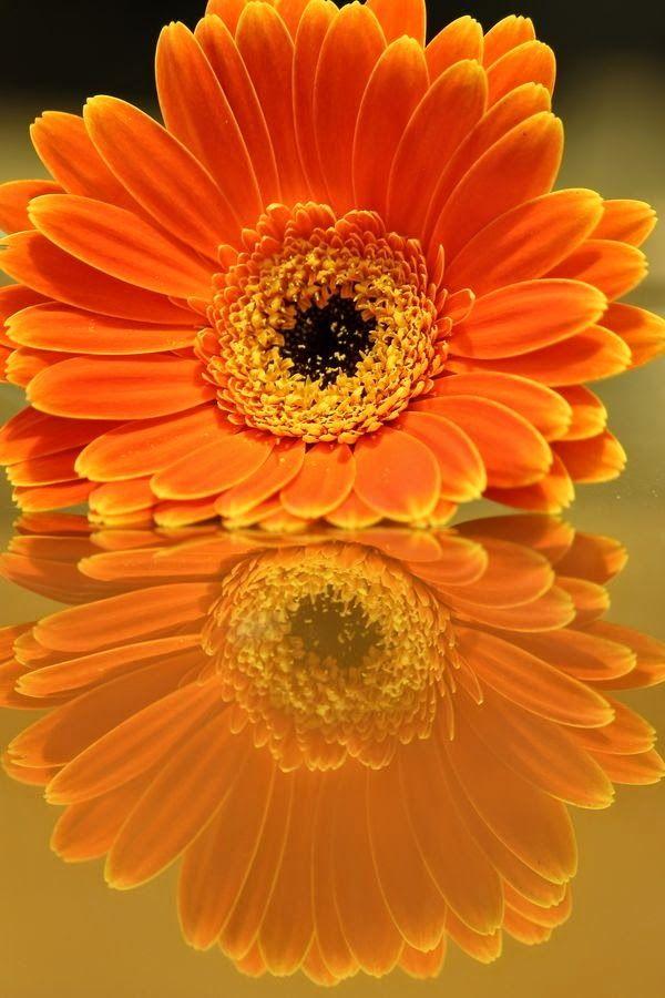 Super Stuffz Flower Reflection Beautiful Flowers Orange Flowers Pretty Flowers