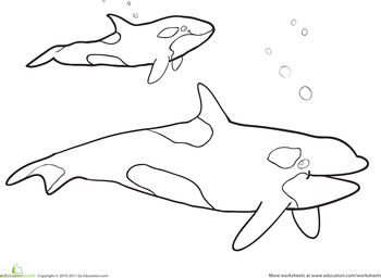 Killer Whale Coloring Page Killer whales Worksheets and Colour book