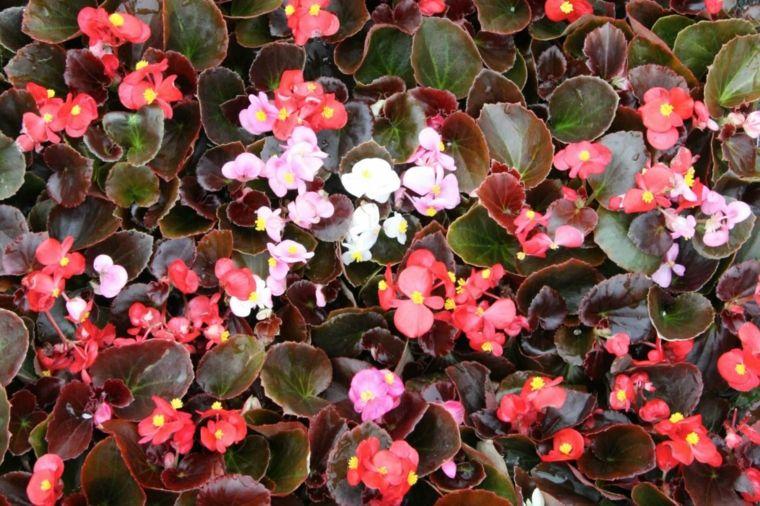 Plantas de sombra 9 opciones para el jardín Wild flowers, Flowers