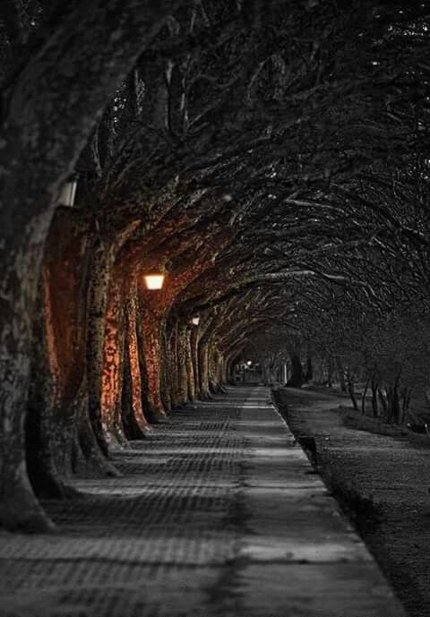 Resultado de imagen de paseo noche solitaria