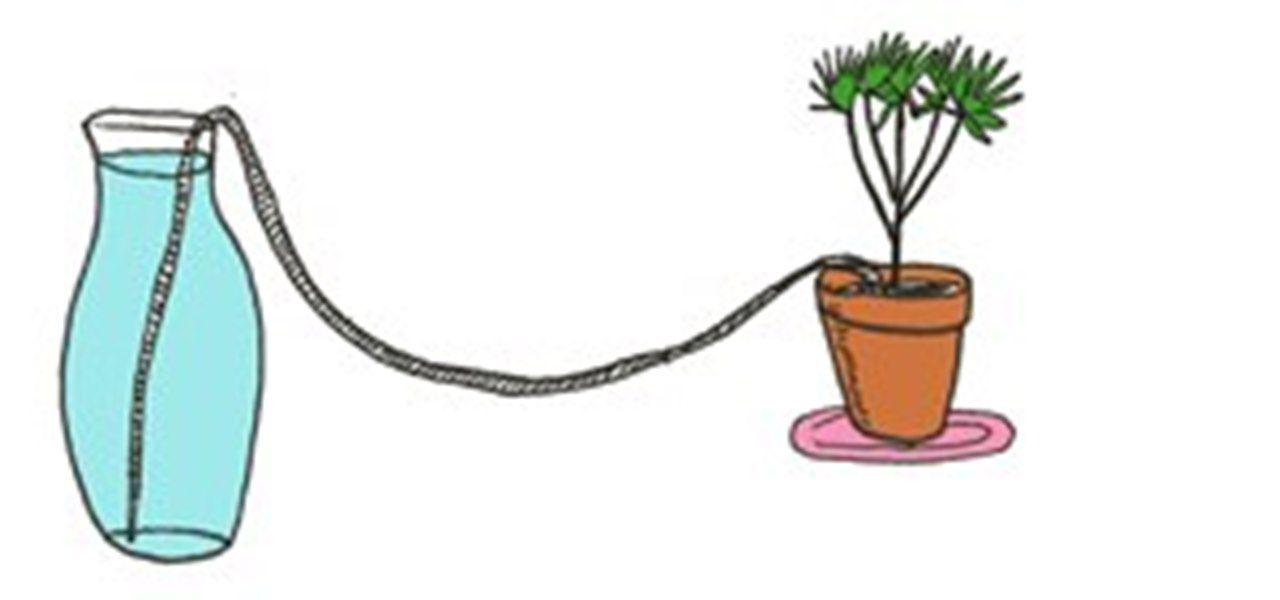 6 DIY Tips for Watering Your Houseplants While Away on Vacation   Houseplants, Plants, Water plants