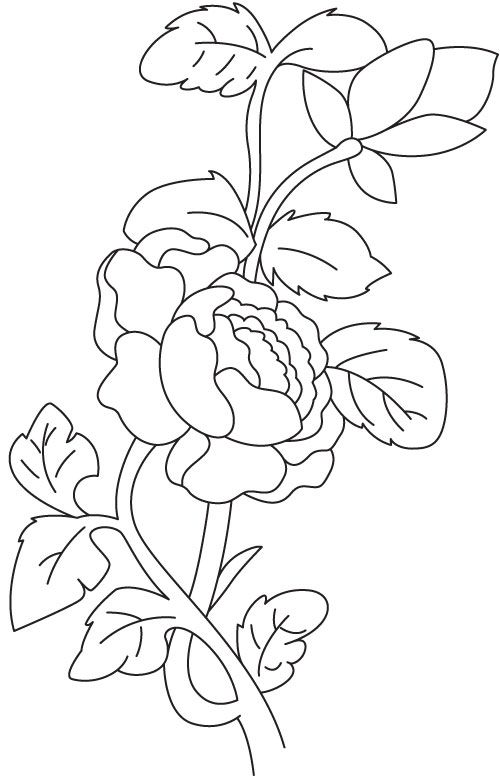 Begonia Plant Coloring Page Flower Art Coloring Pages Art Kit