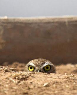 Owl Storytelling: Il cambiamento del clima: i due lati opposti di qu...