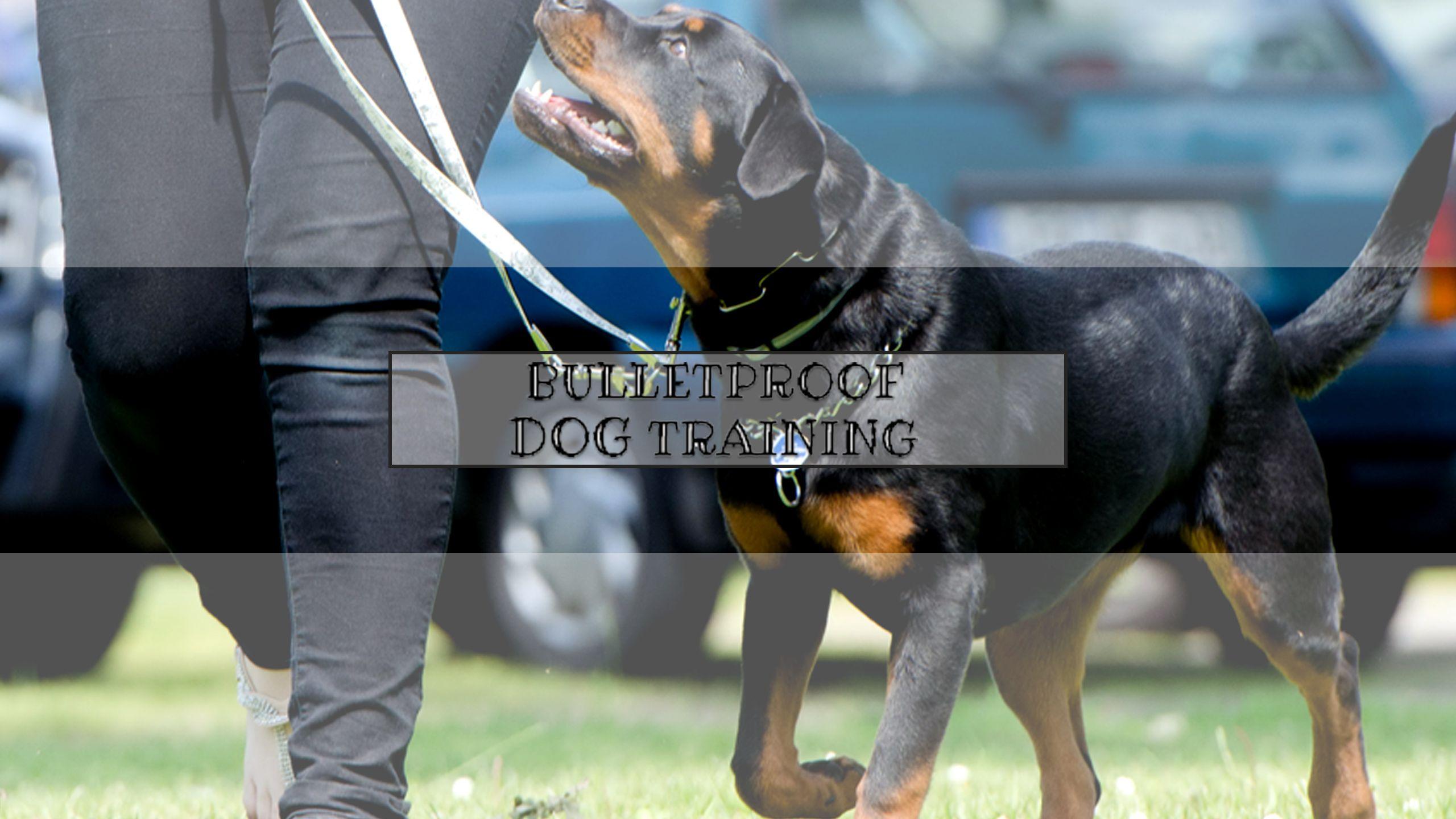 Bulletproof Dog Training Is A Dog Trainer In Cincinnati Oh We