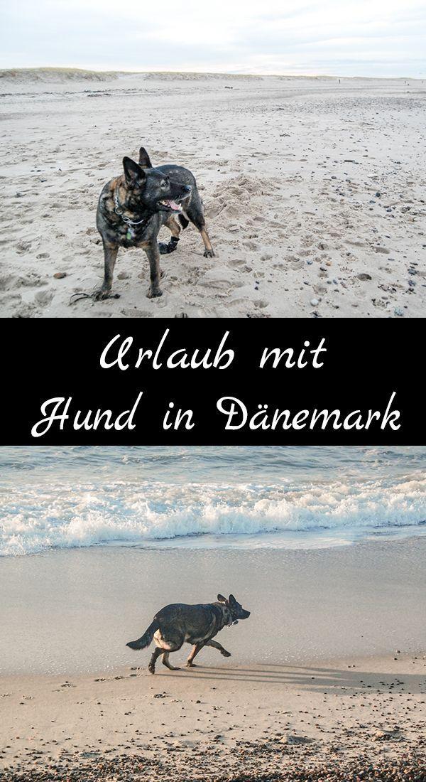 Mit Hund Nach Dänemark