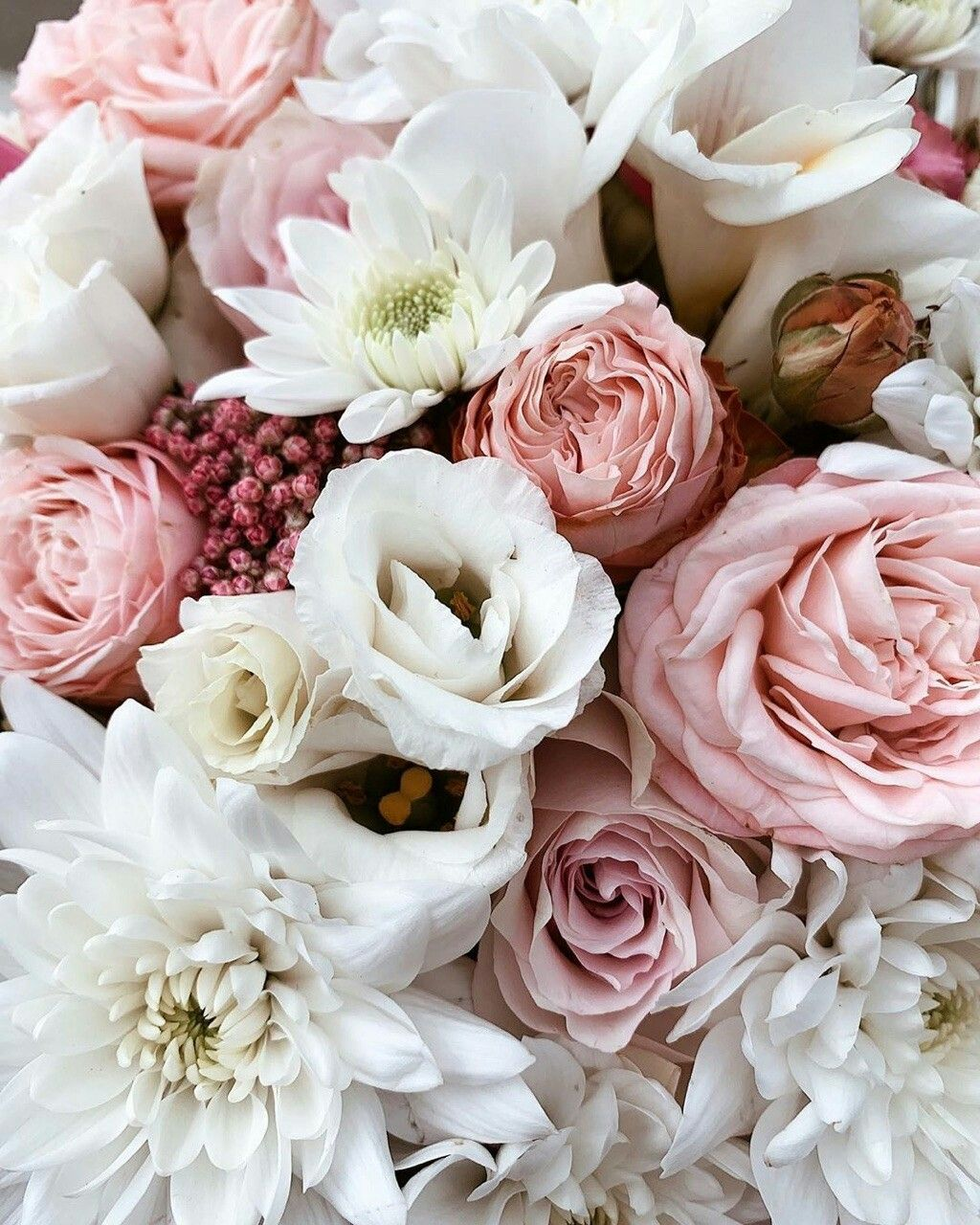 Pin By Dominique Condut On Flowers Beautiful Flowers Flowers White Roses