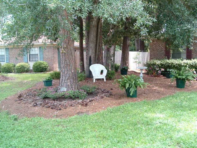 Landscaping Ideas Under Big Pine Tree And For Outside Walkway Are