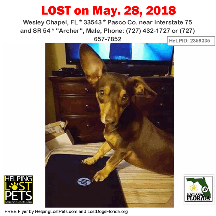 Have You Seen This Lost Dog Lostdog Archer Wesleychapel Interstate 75 Sr 54 Fl 33543 Pasco Co Dog 05 2 Losing A Dog Losing A Pet Brown Dachshund