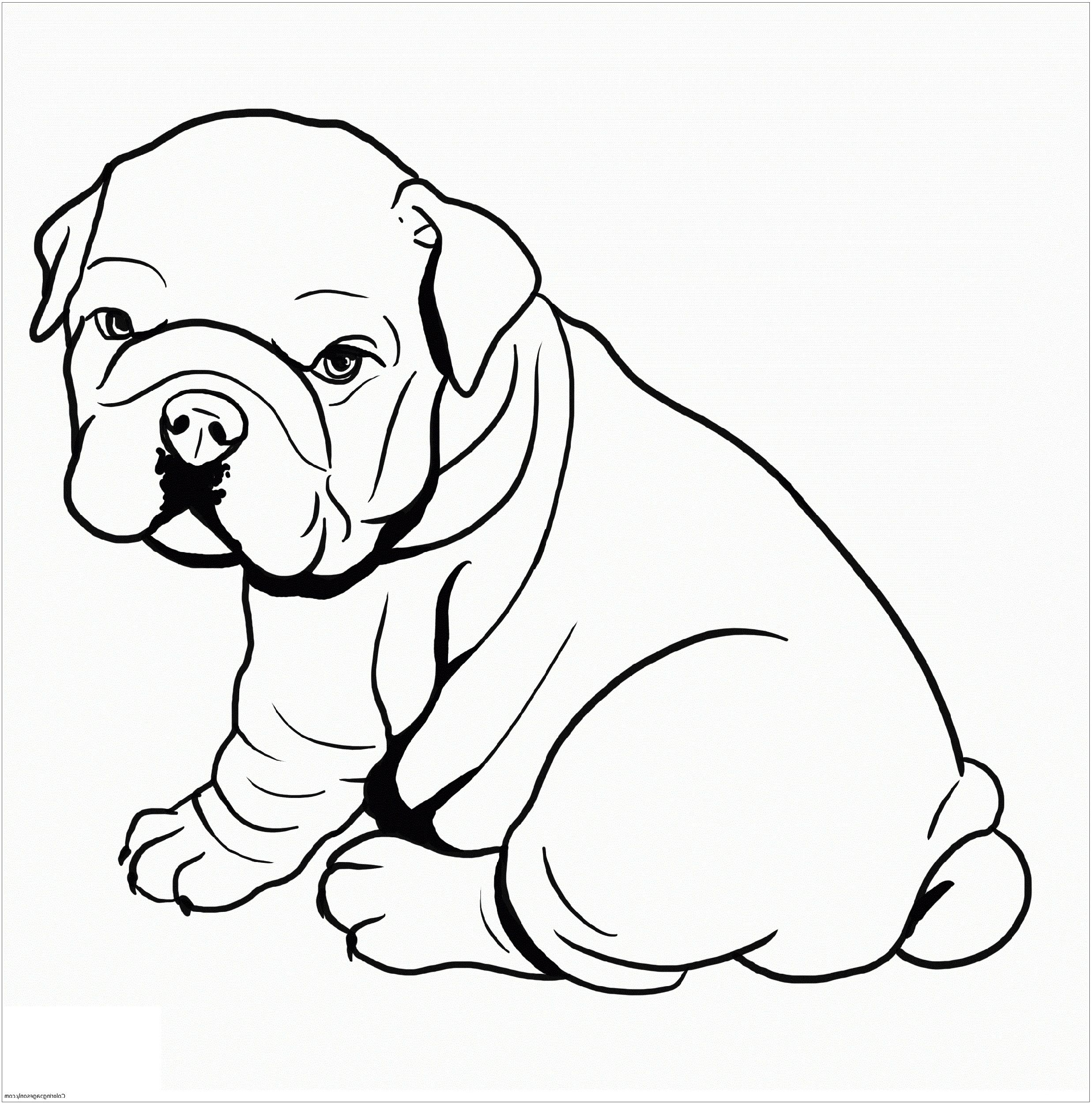 Pitbull Coloring Pages For Dog Lovers Dog Coloring Page Puppy
