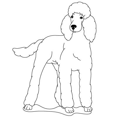 How To Draw A Poodle Fun Drawing