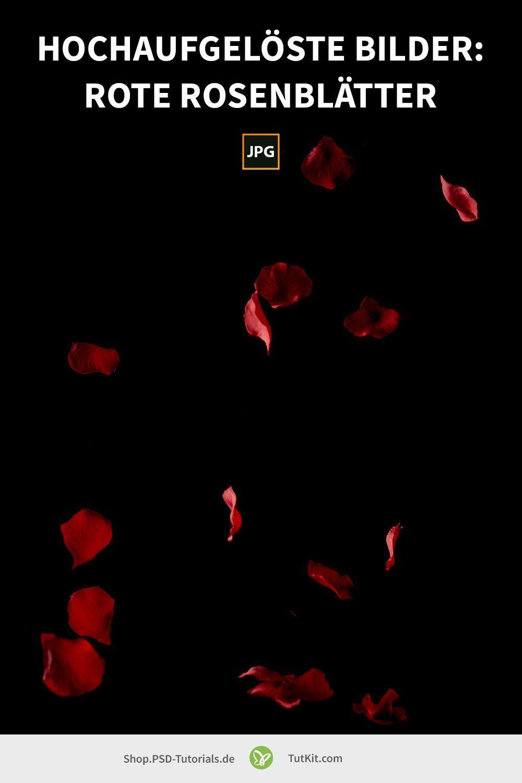Rote Rosen Bilder Textur Rosenblatter In 2021 Rosen Bilder Rosenbilder Rosen