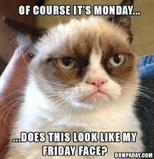 Does this look like Grumpy Cat's Friday Face? :)