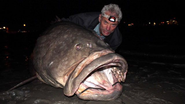 River monsters i am a bit obsessed with this show for Monster fish show