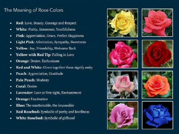 Rose Color Chartwhat They Mean Be Mine Valentine